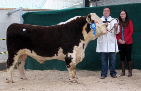 Glaslough Nationwide, Nigel and Theola Heatrick sold at €3,600 to Ted O'Sullivan