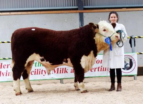 Kilsunny Lincoln with Susan Dudley €3,350