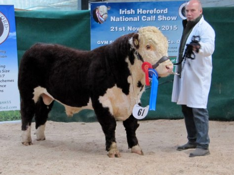 6 Reserve Senior Male Champion Moyclare Nevis with Michael Molloy