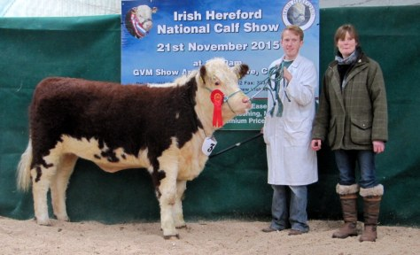9 1st Prizewinner and Senior Female Champion Kilsunny Lass Lily with Edward Dudley and Sandra Irvine representing sponsors Allowdale Herefords