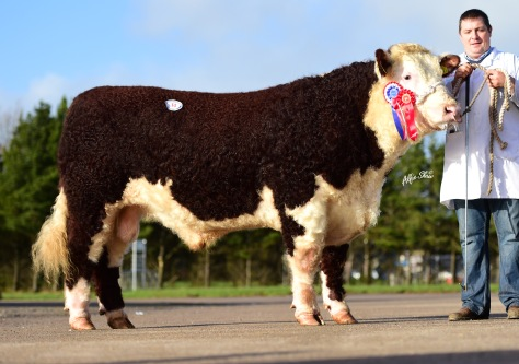 Champion & Equal Top Price, Black Water Limelight from Sam & Nigel Heatrick