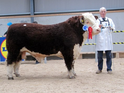 1.Top price bull at €4,700 and Reserve Champion Castledalypoll 1 Michael with owner Michael Farrell, Kilcleagh, Castledaly, Moate