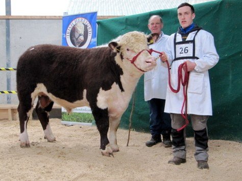 Feevaghmore Invader sold at €3,100 with owner Willie Kennedy, Ballyforan, Co Roscommon and handler John Donoghue a top Roscommon hurler.