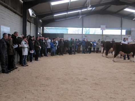 Part of the large crowd in attendance viewing the judging