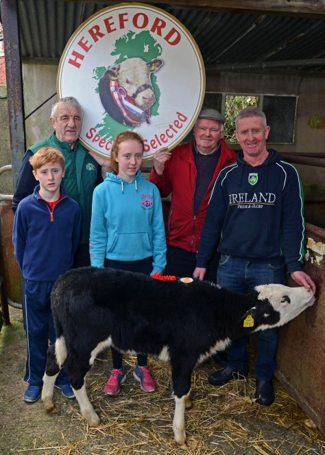 "Pictured at the West Cork Hereford Club Spring Calf Promotion are L to R, Cian O Sullivan, Pat Mc Carthy IHBS, Ciara O' Sullivan, JJ Barrett West Cork Hereford Club, Pat O Sullivan Barryroe seller of 1st prize-winning heifer calf at €320.00. Photography ""Denis Boyle"""