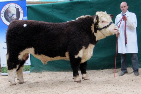 Trillick Daniel sold at €4,400 with owner JJ Farrell, Trillick, Longford