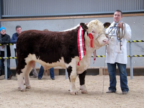 Champion Glaslough Pacesetter €3,800 with owner Nigel Heatrick, Glaslough, Co Monaghan