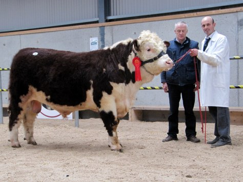 Trillick Admiral 2nd €3,700 with owner JJ Farrell and purchaser Thomas Plunkett, Castletown Finea
