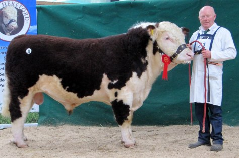 Kye Manhattan 688 with owner Padraig McGrath, Kye, Elphin Sold at €3,700