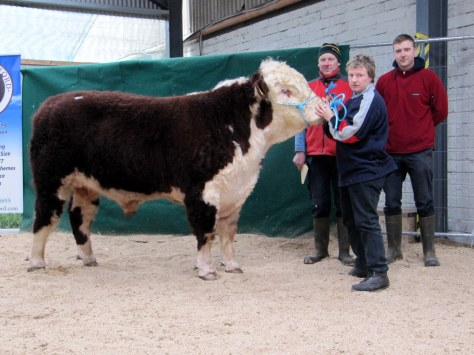 Cill Cormaic Moses with purchasers Michael & Johnny Mooney, Co Wexford and handler Joey Larkin, Kilcormack, Birr