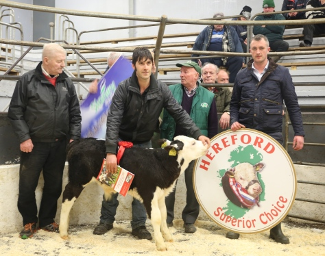 First Prize-winning bull calf pictured with from left Marcus Kellegher Munster Branch IHBS, Judge, John Scott, Boolacullane, Faranfore, Timmy O'Sullivan, IHBS, David White, Castleisland Mart Manager. This calf is sired by Balleen Yankee €525