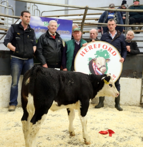 First Prize-winning heifer calf pictured with from left John P Brosnan, Mausrour, Gneeveguilla,Killarney, Marcus Kellegher Munster Branch IHBS, Judge, Timmy O'Sullivan, IHBS, David White, Castleisland Mart Manager. The winner is sired by Shrone Eoin bred by local breeder Jerry O'Connor, Rathmore and sold at €500. The large crowd in attendance agreed she would make an ideal suckler dam in the future.