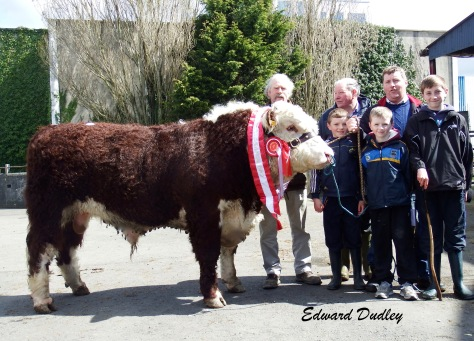 Supreme Male Champion & Top priced bull Ballinveney Rebel with Coote Geelan (judge), John Johnston, Brian Farrell, Seamus Farrell, Rory Farrell (exhibitor) and Daniel Farrell.
