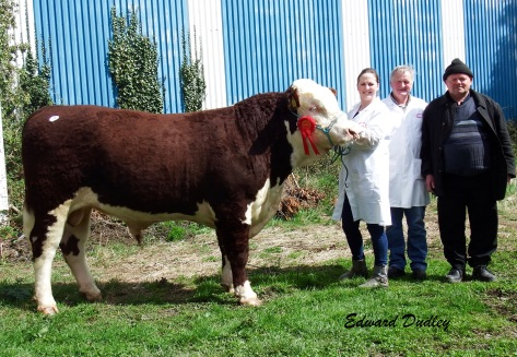 Second highest priced bull & 1st prize winner Gurteragh Orson with Eileen & Michael O' Keeffe, (exhibitors) and Michael Kelleher (purchaser)