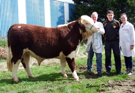 Gurteragh Dartangan 641 sold for €3000 with Michael O' Keeffe, (exhibitor), Naise Muldoon, (purchaser) and Eileen O' Keeffe.