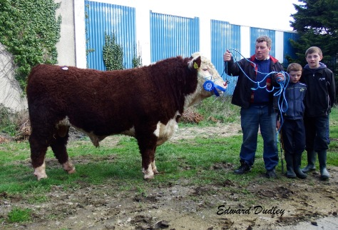 Ballinveney Rusty sold for €3000 with Rory, Brian & Daniel Farrell (exhibitors).