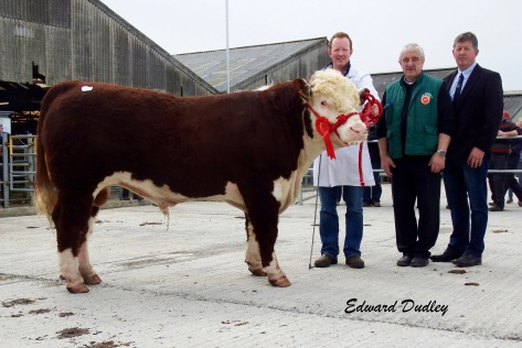 Second highest priced bull & 1st prize winner Clondrinapoll 1 Jack with Declan Donnelly (exhibitor), Pat McCarthy (judge) and Glenn Jacob (judge).