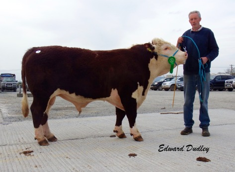 Third highest priced bull at 3,200 - Furaleigh Ben 963 with Ted O' Sullivan (exhibitor)