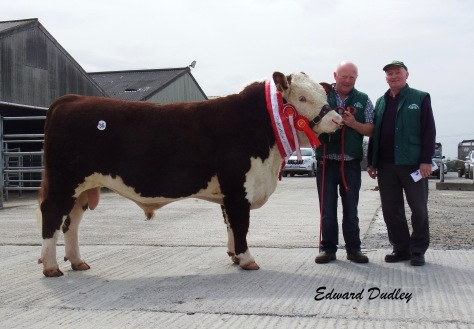Supreme Champion & top priced bull Kye Harry 697 with Padraig McGrath (exhibitor) and Timmie O' Sullivan (purchaser)