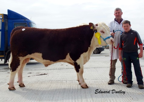 Boveen Nicky sold for €3,000 with Joe O' Connor (exhibitor) and Enda White (handler)