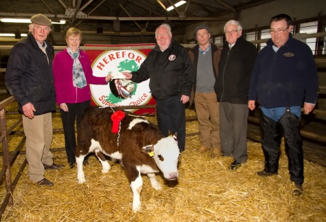 Hereford Male Winner property of Denis Guerin  (L to R) Donnie Mullins Judge, Mary of G.V.M,John Neenan president of Irish Hereford Breed Society, John McAuliffee Hereford Breeder, Hugh Mulvihill Hereford auctioneer and David Geary Judge