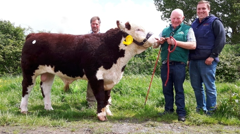Kye Hulk 706 with purchaser James Thompson, owner Padraig McGrath and James Thompson Junior.€5,000