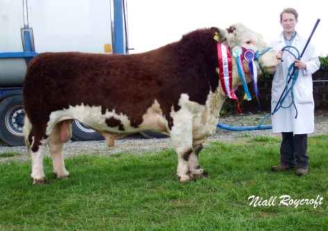 Supreme Hereford Champion & Reserve Inter-Breed Champion Glaslough Judge with Edward Dudley (handler)