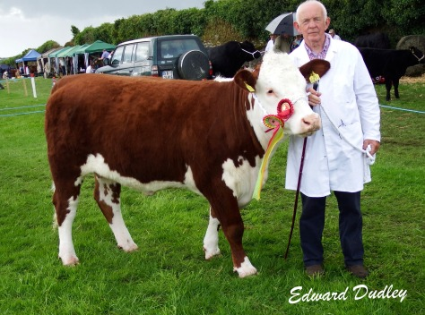 Reserve Hereford Champion Banteer 1 Gem with Dermot McCarthy (handler)