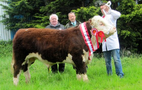 Show Champion Tullaha Morgan with Owner Society President John Neenan, Tom Brennan Judge and Tommy Creegan.