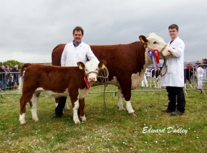 Supreme Hereford Champion Gouldingpoll 1 Duchess 591 and her heifer calf at foot with Matthew & David Goulding (exhibitors)