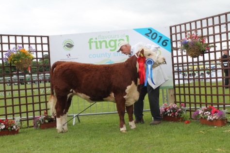 Reserve Champion Knockmountagh Willow with owner Eamon McKiernan