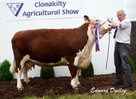 Reserve Hereford Champion Slieveroe Elsie with Adrian Bateman (exhibitor)