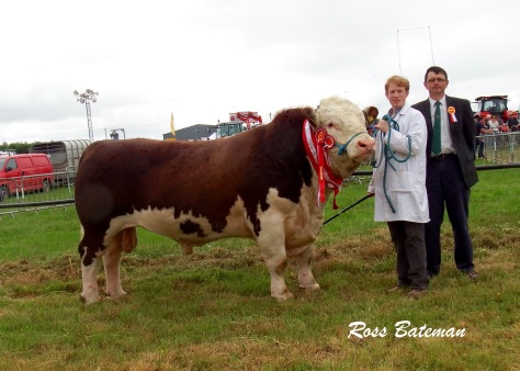 Supreme Hereford Champion Glaslough Judge with Edward Dudley (handler) and Joe Deverell (judge)