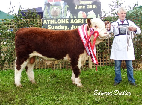 Supreme Hereford Champion Brocca Martin with Noel Farrell (exhibitor)