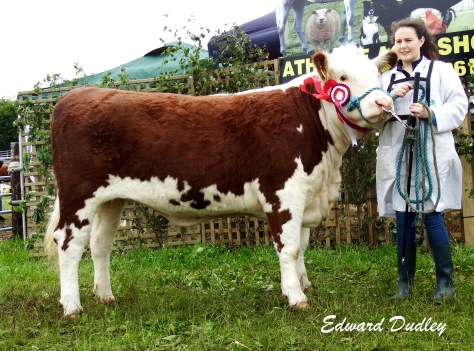 Reserve Hereford Champion Kilsunny Lass Lily with Susan Dudley (handler)
