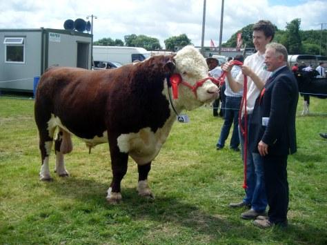1.Overall Hereford Champion Knockmountagh Duke  with Niall Roycroft and  Judge David Larkin