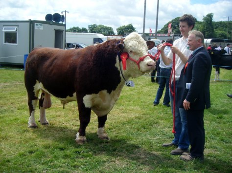 1.Overall Hereford Champion Knockmountagh Duke  with Niall Roycroft and  Judge David Larkin