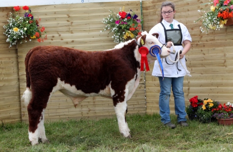 Reserve Champion Shiloh Farm Dynamite with Sarah Murray