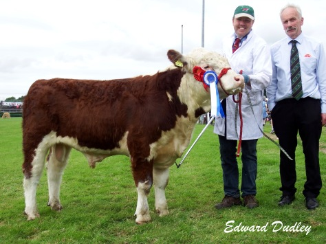Reserve Hereford Breed Champion Apple 1 Defender with John Applebe (exhibitor) and Derek Lovell (judge)