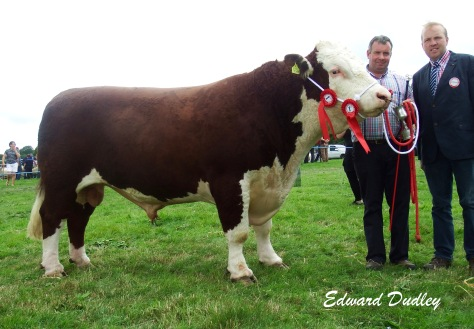 Supreme Hereford Champion Dieulecresse Hector with Vincent Behan (exhibitor) and John Applebe (judge)