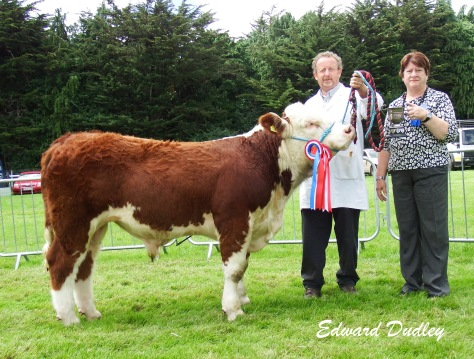 Overall Hereford Calf Champion Balleen Perfection with Tom Brennan (exhibitor) and Cathleen Sheehan presents the Powerstown Trophy