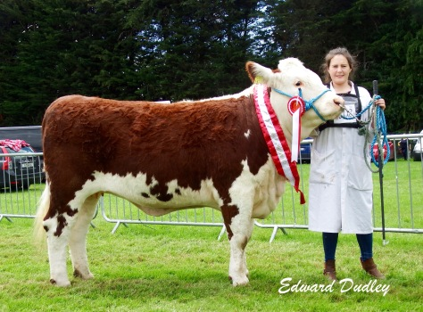 Supreme Hereford Breed Champion Kilsunny Lass Lily with Susan Dudley (handler)
