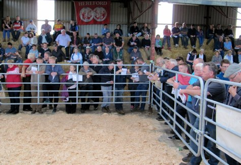 Part of the large crowd in attendance for the first Special Heifer sale at Allowdale