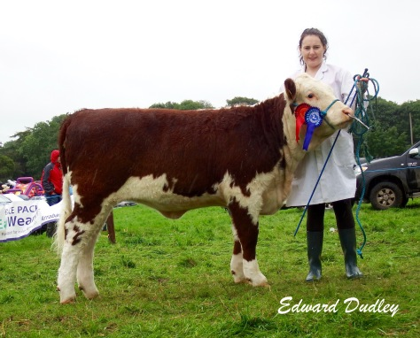 Reserve Premier Heifer of the Year, Kilsunny Lass Matilda with Susan Dudley (handler)