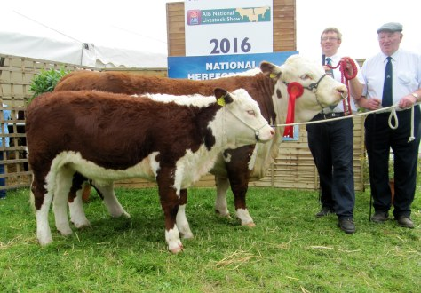 Senior Cow class winner Grianan Orange 589 with her calf and Owners Mervyn and Henry Parr