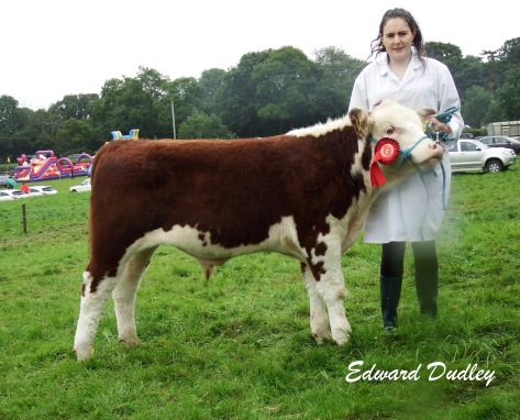 1st prize winner, Junior bull calf, Kilsunny Mozart with Susan Dudley (handler)