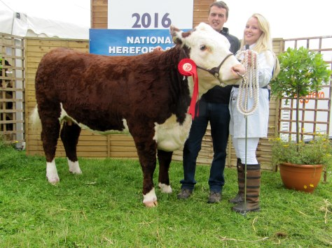 Winner Senior Heifer class Gouldingpoll 1 Lucy 641 with owner Veronica Brennan