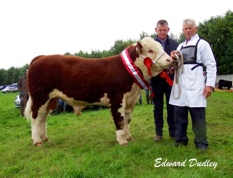 Premier Bull Calf of the Year Brocca Martin with Noel Farrell (exhibitor) and Michael Cleary (Irish Hereford Prime, major sponsor)
