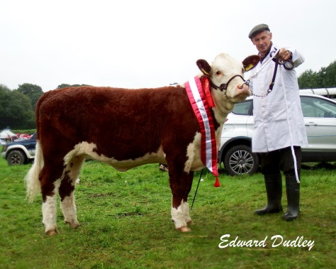 Premier Heifer Calf of the Year Grianan Orange P752 with Tom Fitzgerald (exhibitor)