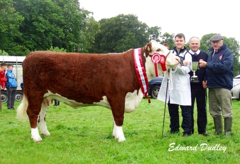 Supreme Hereford Breed Champion Gouldingpoll 1 Duchess 591 with David Goulding (handler), Tommy Beirne (judge) and Martin Murphy (representative Munster Branch)